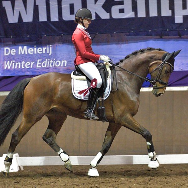 Zilver voor Happyboy op de Brabantse Kampioenschappen!